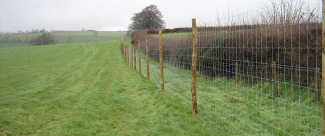 Hot Dipped Zinc Plated Steel Mesh for Field Fence